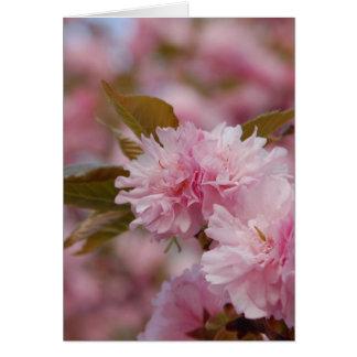 Frühlings-Kirschblüte Karte
