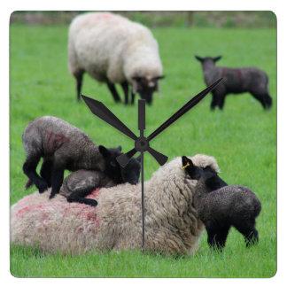 Frühlings-Lamm und Schafe Quadratische Wanduhr