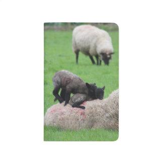 Frühlings-Lamm und Schafe Taschennotizbuch