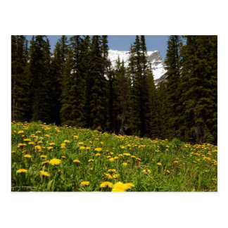 Frühlings-Löwenzahn-Blumen nähern sich Lake Louise Postkarte