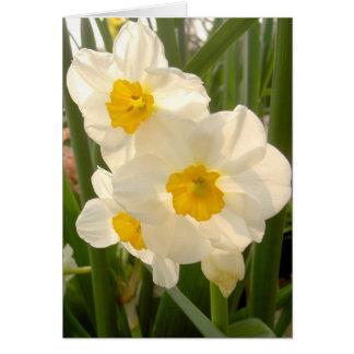 Frühlings-Narzissen Grußkarte
