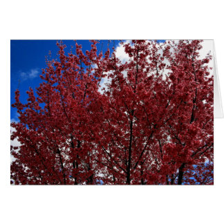 Frühlings-Rosa Karte