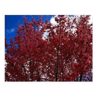 Frühlings-Rosa Postkarte