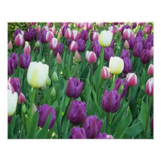 Frühlings-Tulpen mit Blumen Poster