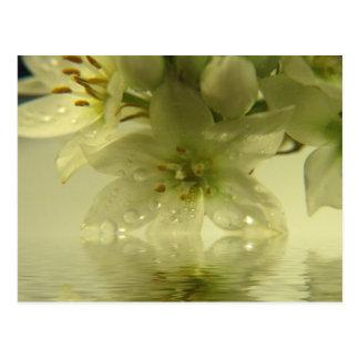 Frühlings-Verzauberung Postkarte