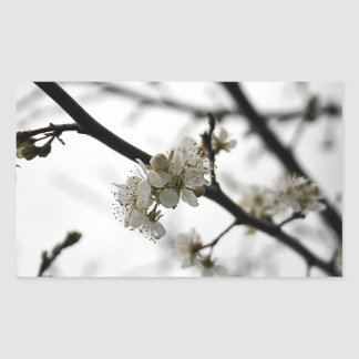 Frühlings-Weiß-Aufkleber Rechteckiger Aufkleber