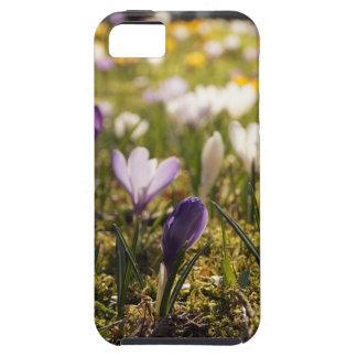 Frühlings Wiese mit Krokus im Gegenlicht Hülle Fürs iPhone 5