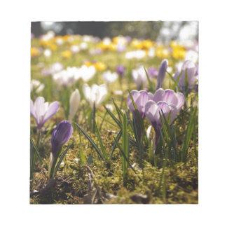 Frühlings Wiese mit Krokus im Gegenlicht Notizblock