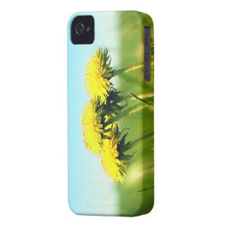 Frühlingslöwenzahn iPhone 4 Case-Mate Hülle