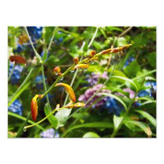 Frühlingsregen Fotodruck