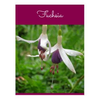 Fuchsia Postkarte