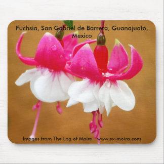 Fuchsie (fuschsia), San Gabriel de Barrera Mousepad