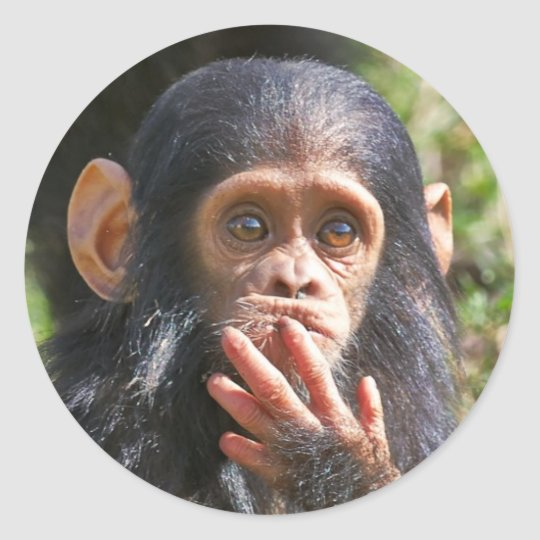 funny picture of young chimpanzee runder aufkleber