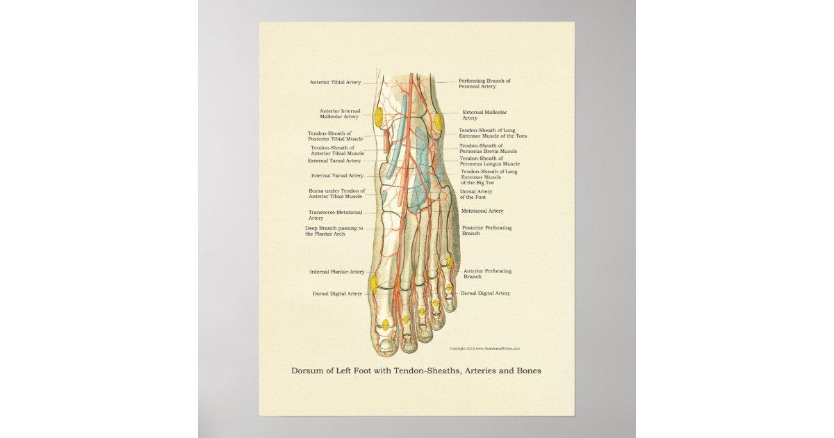 Charmant Skelett Fuß Diagramm Ideen - Anatomie Ideen - finotti.info