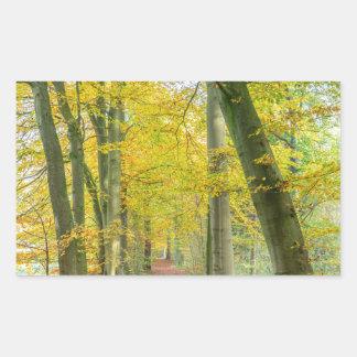 Fußweg im Wald bedeckt mit gefallenem Blätter Rechteckiger Aufkleber
