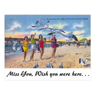 Füttern der Möven, Clearwater Strand, Florida Postkarte