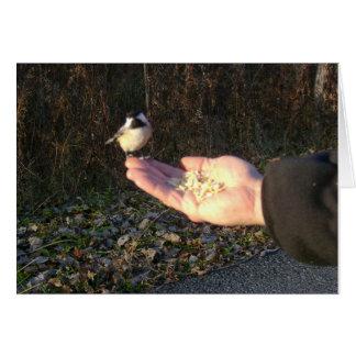 Füttern eines Chickadee Karte