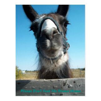Füttern Sie nicht das Drama-Lama Postkarte