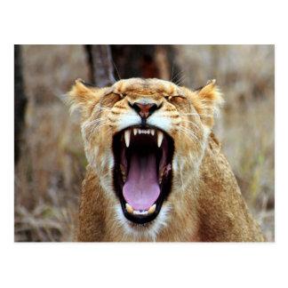 Gähnender Löwe Postkarte