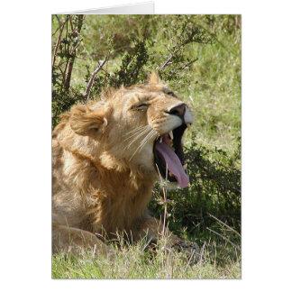 (Gähnender Löwe-Verein-) Löwe - Masai Mara Karte