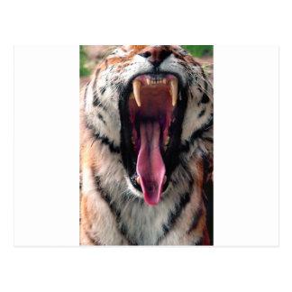 Gähnender Tiger 2 Postkarte