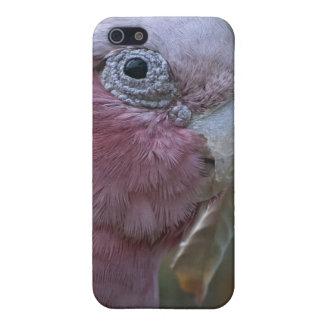 Galah iPhone 5 Hüllen