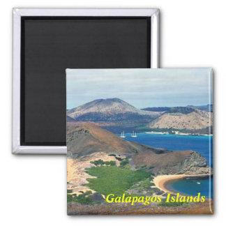 Galapagos-Inselmagnet Quadratischer Magnet