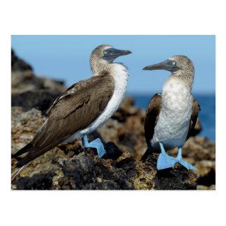 Galapagos-Inseln, Isabela-Insel Postkarte