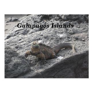Galapagos-Inseln Postkarte