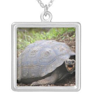 Galapagos-Schildkröte mit dem Mund offen Versilberte Kette