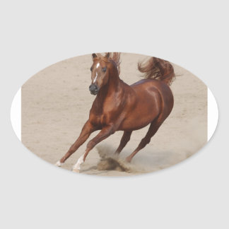 Galoppierendes Brown-Kastanien-Pferd tritt oben Ovaler Aufkleber