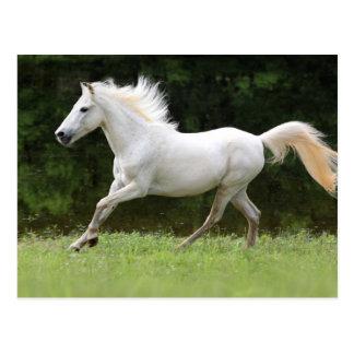 Galoppierendes weißes Pferd Postkarte