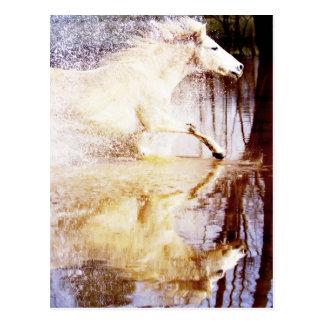 Galoppierendes weißes Wasser-Pferd Postkarten