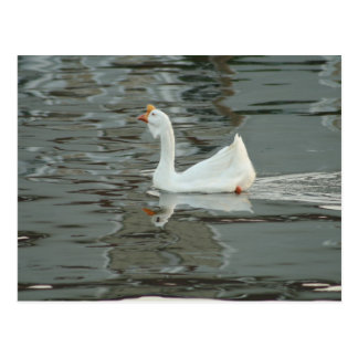 Gans oder Ente? Postkarte