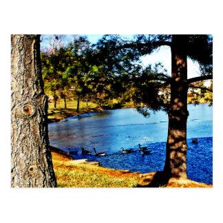 Gänse, die in halb gefrorenem See - Bäume Postkarte