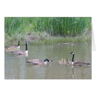 Gänse und Gänschen auf einem Teich # 2 Karte