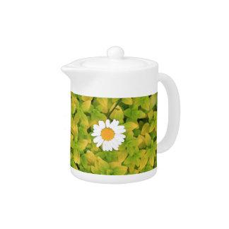 Gänseblümchen-Blume, die für den Sun erreicht