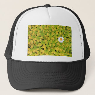 Gänseblümchen-Blume, die für den Sun erreicht Truckerkappe