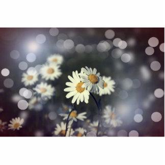 Gänseblümchen-Blume Freistehende Fotoskulptur