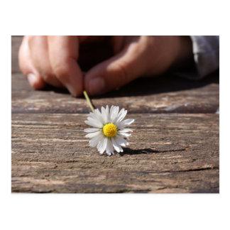 Gänseblümchen-Blume Postkarte