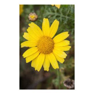 Gänseblümchen-Blumen-Cugelb Briefpapier