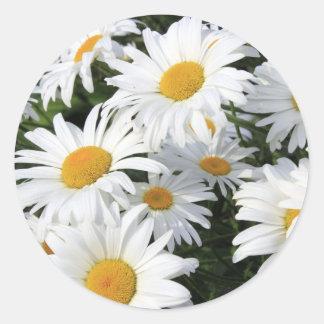 Gänseblümchen-Blumen, die weiß wachsen Runder Aufkleber