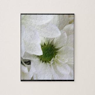 Gänseblümchen in (größtenteils) all-weißem puzzle