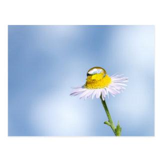 Gänseblümchen Postkarte