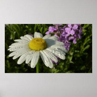 Gänseblümchen und Sommer-Flieder Poster