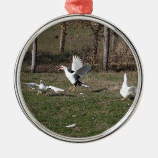 Ganskämpfen Rundes Silberfarbenes Ornament