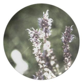 Ganz über Blütenstaub Teller