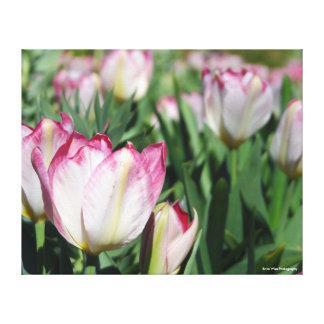 Garten der Tulpen Leinwanddruck