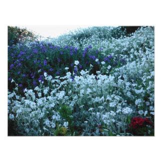 Garten Neuseeland Fotodruck