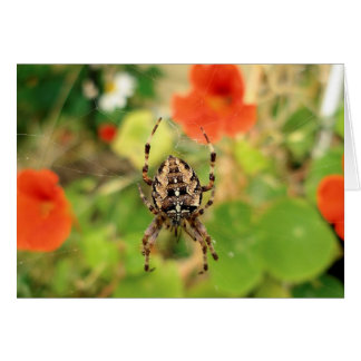 Garten-Spinne Karte
